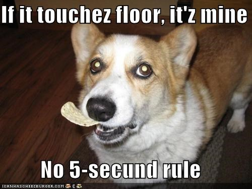 If it touchez floor, it'z mine No 5-secund rule