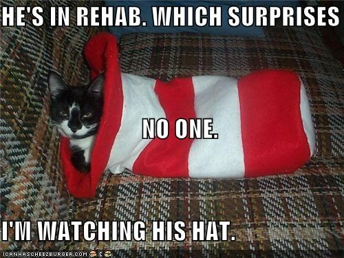 caption,captioned,cat,cat in the hat,hat,rehab,surprise,unsurprising,watching