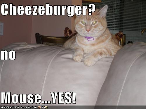 Cheezburger Image 4899404544