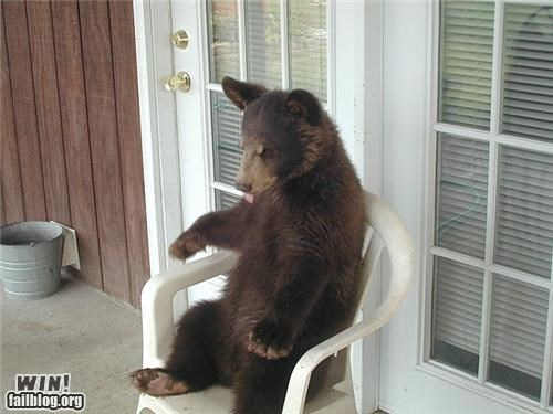 animals,bear,porch,relaxing