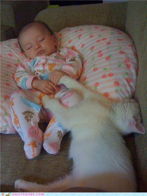 baby best friends cat cuddling friendship human kitten reader squees sleeping - 4899691008