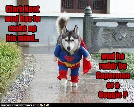 costume,decision,dressed up,husky,options,superhero,superman