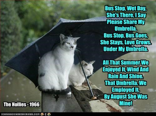 Bus Stop, Wet Day, She's There, I Say Please Share My Umbrella. Bus Stop, Bus Goes, She Stays, Love Grows. Under My Umbrella. All That Summer We Enjoyed It, Wind And Rain And Shine. That Umbrella, We Employed It. By August She Was Mine! The Hollies - 1966