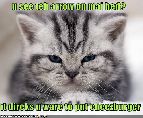arrows cheezburgers kitten lolcats lolkittehs - 490041088