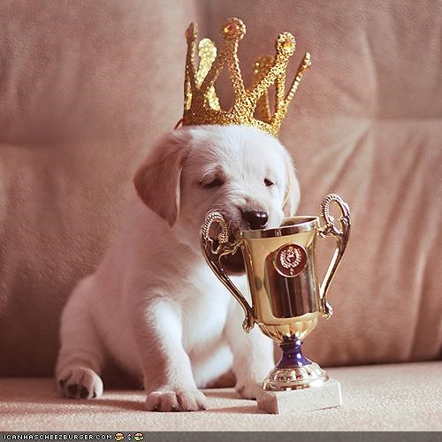 crown cup cyoot puppeh ob teh day king puppy trophy yellow lab - 4900731136