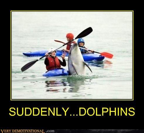dolphins,hilarious,kayak,wtf
