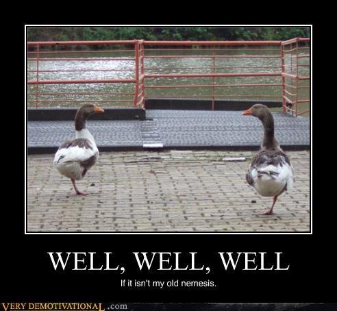duck fight hilarious nemisis - 4900816896