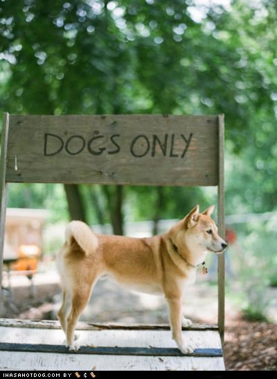 clubhouse,dog house,dogs only,no cats,shiba inu,sign,trees,yard