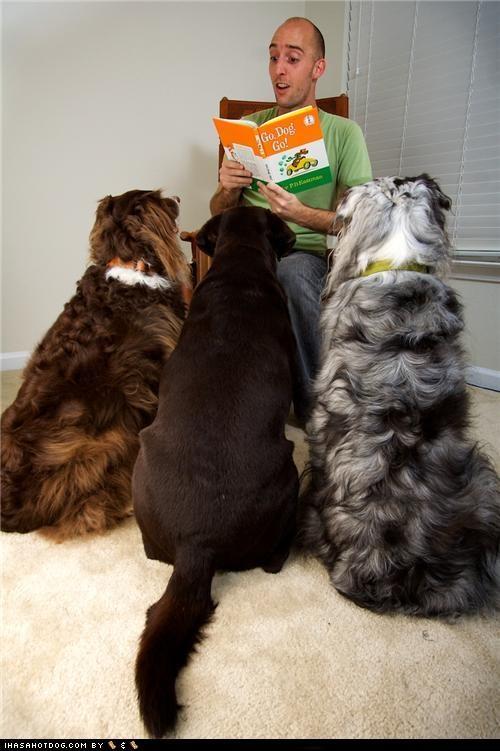 australian shepherd best of the week Black Lab go dog go Hall of Fame Story Time - 4900883712