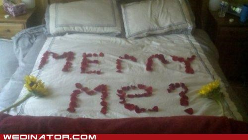 bed,funny wedding photos,proposal,rose petals,typo