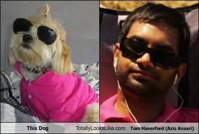 actors,aziz ansari,dogs,parks and recreation,sunglasses,Tom Haverford