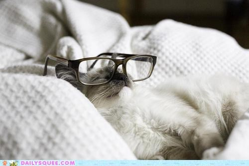 acting like animals,cat,glasses,interrupted,mocking,napping,pretending,sarcastic,uninterested