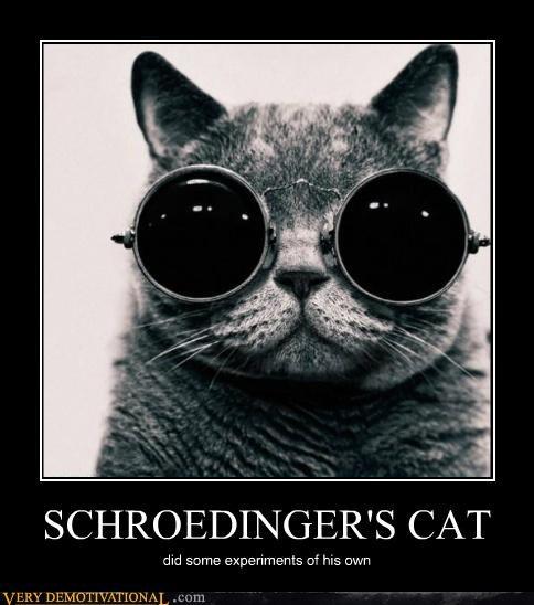 cat experiments glasses hilarious shrodingers-cat - 4901329152