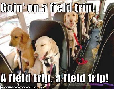excited field trip going labrador labradors singing song trip
