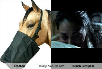 animals,feedbag,gross,horses,human centipede