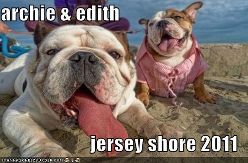 2011 bulldog bulldogs jersey shore Photo posing - 4902632192