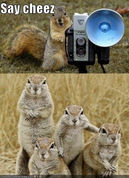 camera caption captioned cheese Command meerkat Meerkats photograph photography say squirrel