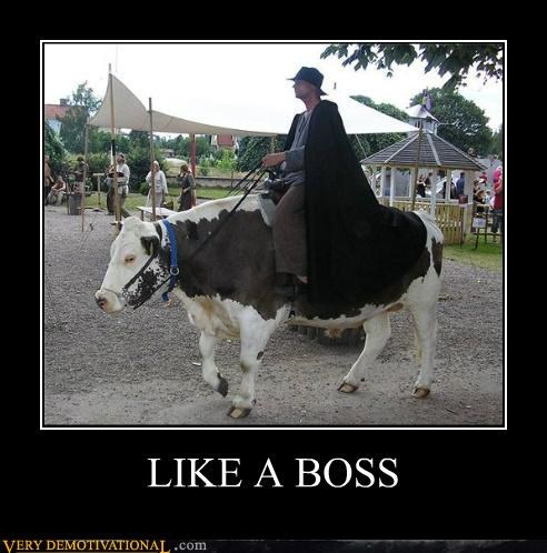 cow Like a Boss Pure Awesome ride wtf