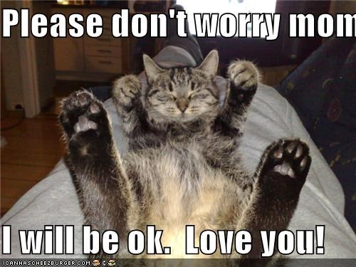 Please Don T Worry Mom I Will Be Ok Love You Cheezburger Funny Memes Funny Pictures