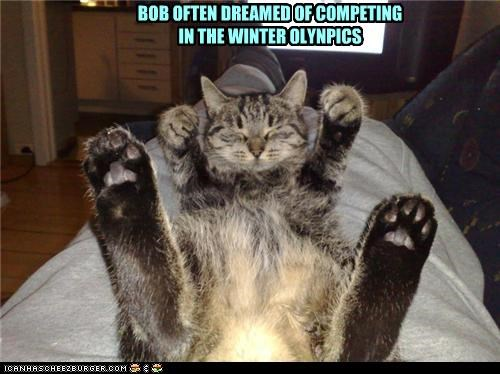 caption captioned cat competing dreaming olympics poles posing ski skiing winter - 4903368448