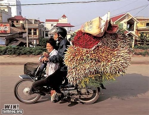 balance,bucycle,food,load,transport