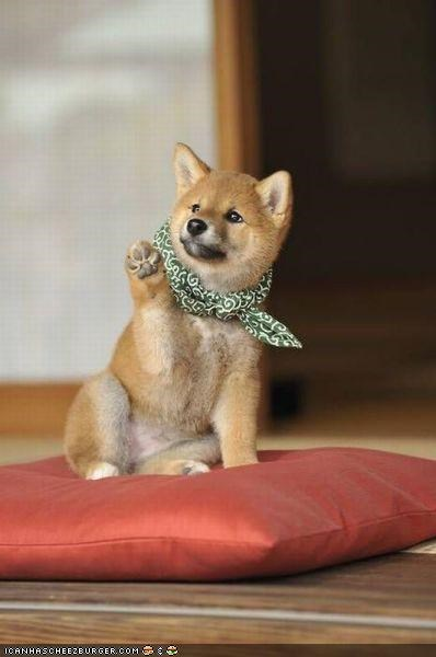 cyoot puppeh ob teh day Pillow scarf shiba inu wave
