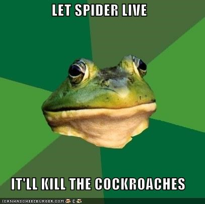 Battle,circle of life,cockroach,foul bachelor frog,spider
