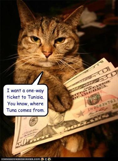 caption captioned cat location money origin ticket tuna where - 4904593920