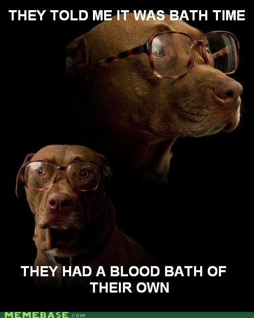 animemes,bath,Blood,Death,dogs,glasses,Memes,stains