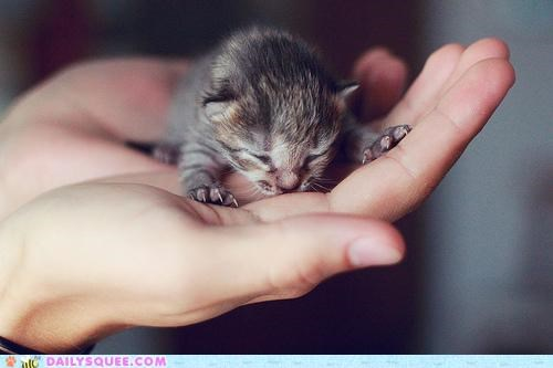 200 percent baby beautiful cat Hall of Fame kitten perfect pristine rare serene squee tiny valuable