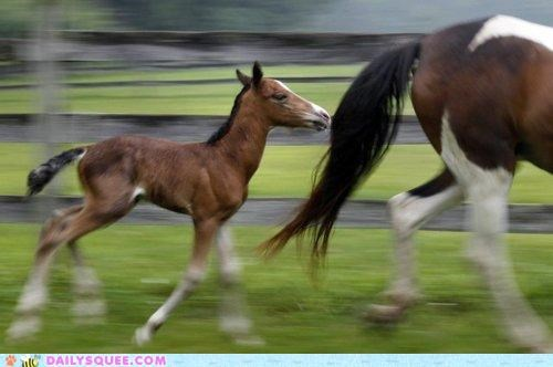 adorable baby colt energetic energy horse horses mother running - 4905369600