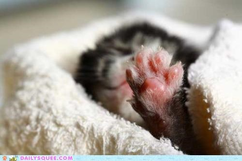 adorable alarm clock baby cat itty bitty kitten paw reaching sleeping tiny toes willing willpower - 4905448960