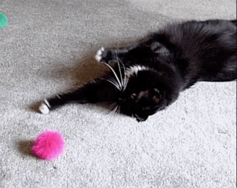 gifs lazy cats cute Cats funny - 4905733