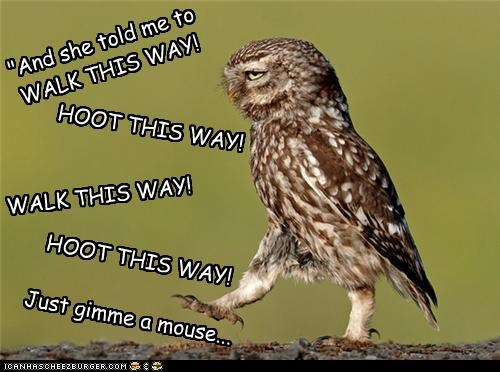 """And she told me to WALK THIS WAY! HOOT THIS WAY! WALK THIS WAY! HOOT THIS WAY! Just gimme a mouse..."