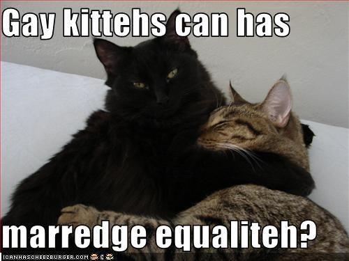 Caturday kitteh LGBT rights - 4906540032