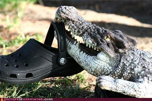 animals,croc,crocodile,shoe,wtf