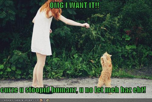 OMG I WANT IT!!  curze u stoopid humanz, u no let meh haz eht!