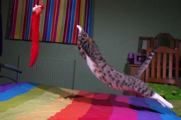 kitten cute cat jumping funny - 4907781