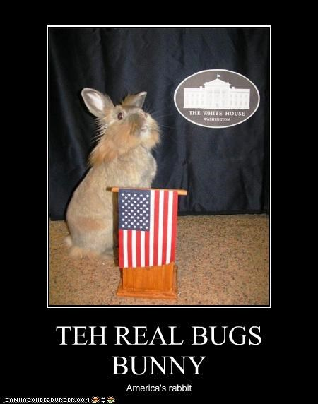 TEH REAL BUGS BUNNY America's rabbit