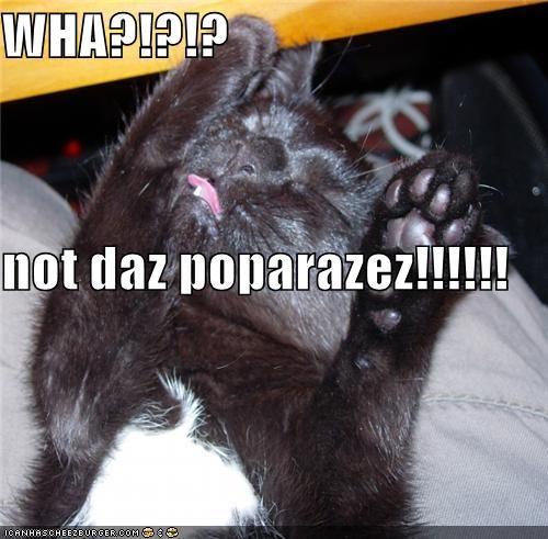 WHA?!?!? not daz poparazez!!!!!!