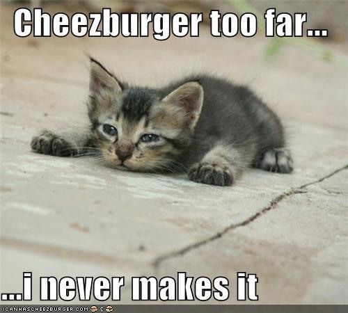 Cheezburger Image 4908597760