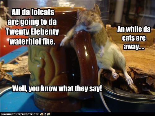 All da lolcats are going to da Twenty Elebenty waterblol fite.