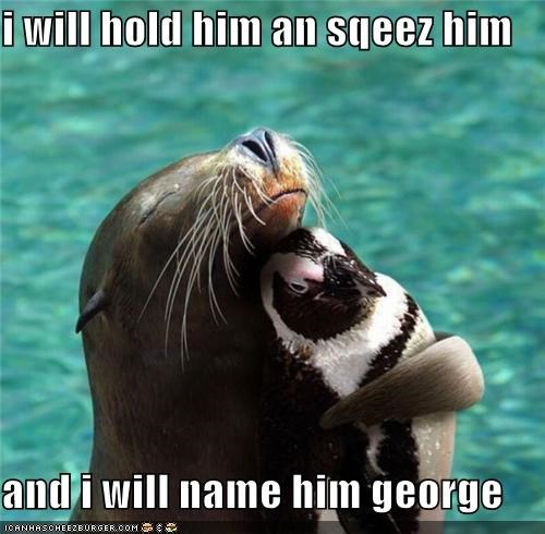 best of the week,caption,captioned,cuddling,George,hold,looney tunes,love,name,penguin,quote,sea lion,squeeze
