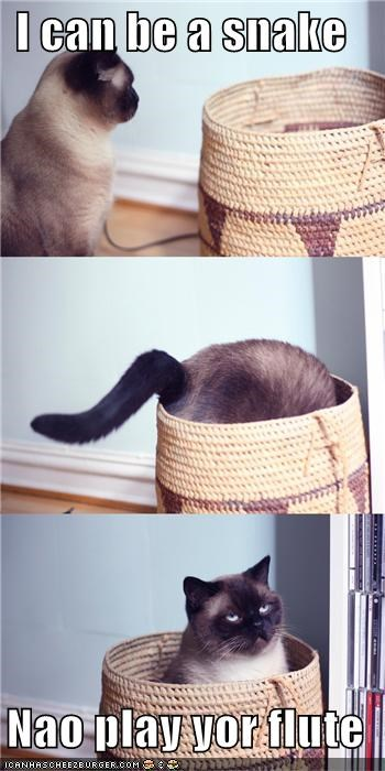 basket be can caption captioned cat Command flute now play siamese snake - 4909391104