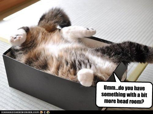 asking box caption captioned cat cramped head maru more question room stuck tiny - 4910123264