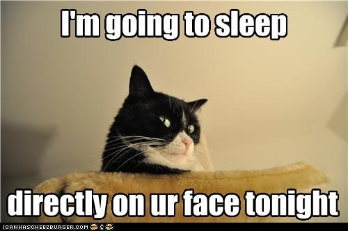 best of the week caption captioned cat directly face fyi going on sleep tonight warning - 4910137344