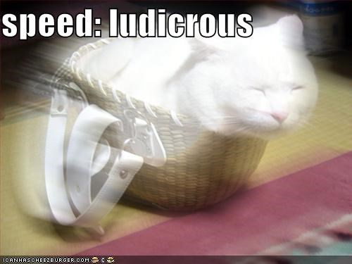 basket blur blurry caption captioned cat fast ludicrous speed traveling