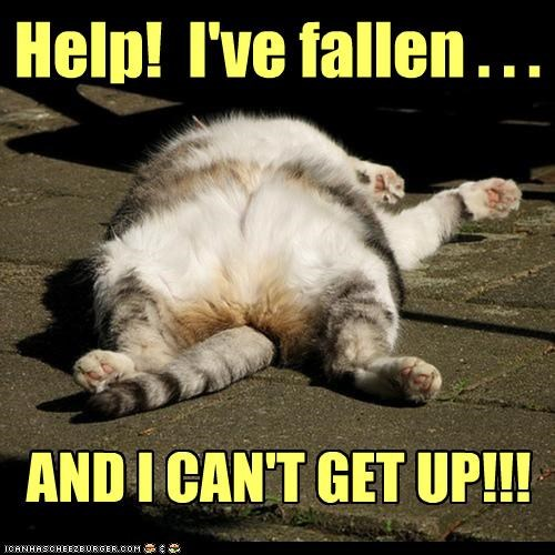 Help! I've fallen . . . AND I CAN'T GET UP!!!