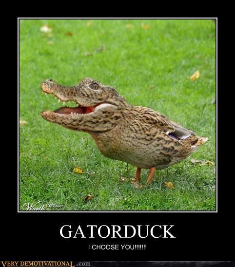choose you duck gator hilarious Pokémon - 4911129344