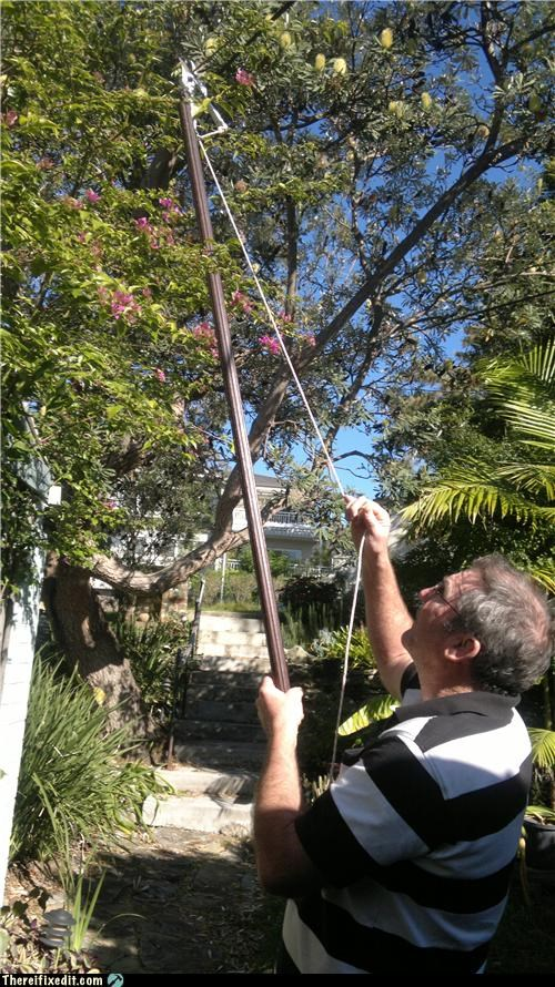 pruning,tree,pruner